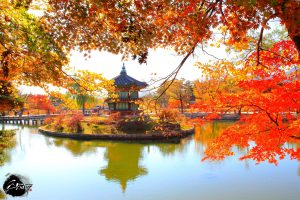 SEOUL – ĐẢO NAMI – EVERLAND